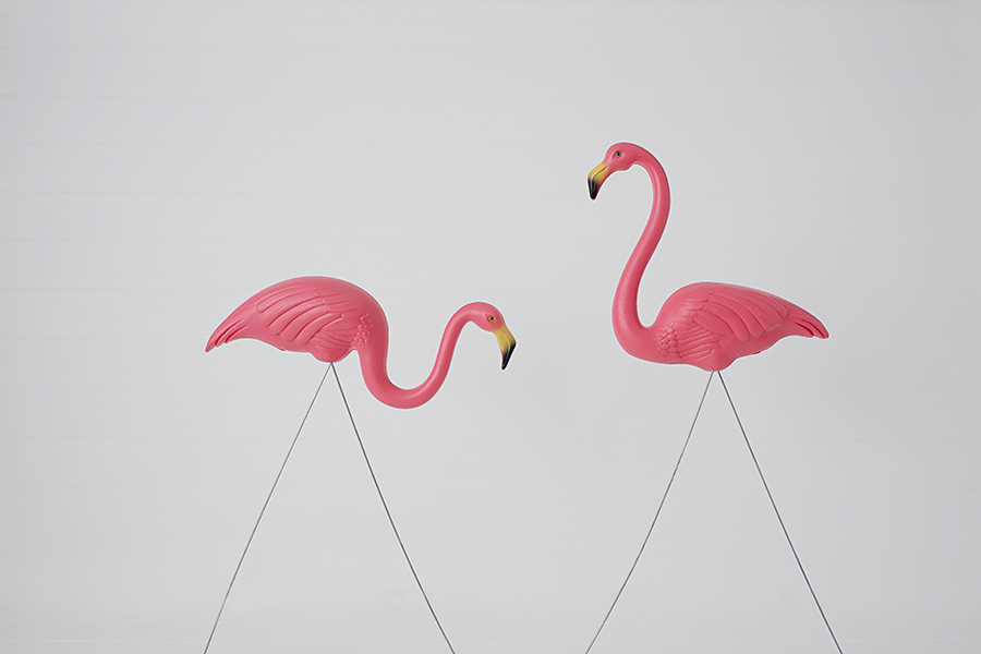 A Tale of a Pink Flamingo